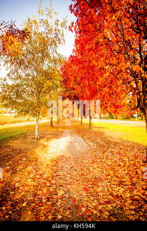 Murray to the Mountains Rail Trail through the stunning changing colours of Autumn in the Victoria Alpine Valleys - Stock Photo