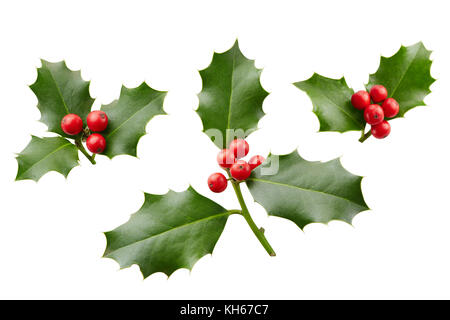 Christmas Holly With Red Berries. Traditional festive decoration. Holly branch with red berries on white. - Stock Photo