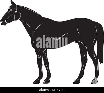 rearing up horse fine vector silhouette and outline - graceful black stallions - Stock Photo