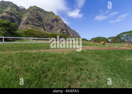 Kualoa Ranch and mountains on the Island of Oahu - Stock Photo