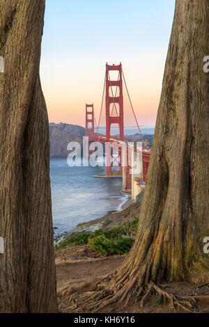Golden Gate Bridge Through Cypress Trees. - Stock Photo