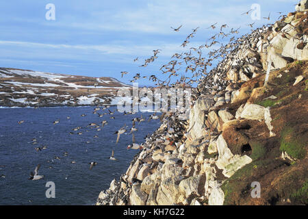 The great escape,in arctic cliff - Stock Photo