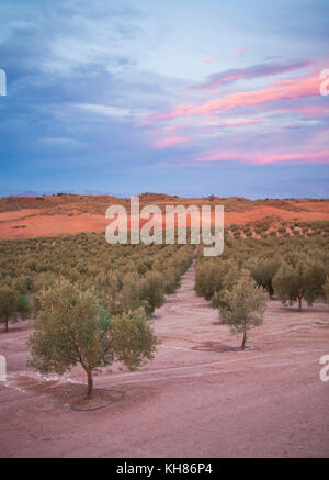 Olive grove at twilight around the village of Montefrio, Province of Grenada (Granada), Andalusia, Spain - Stock Photo