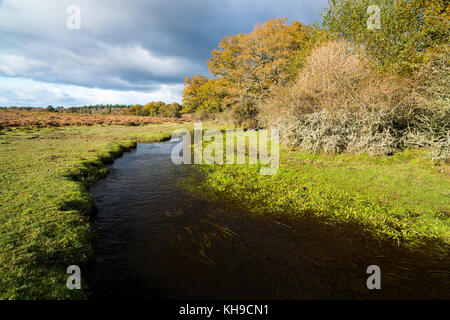 Ober Water near Holm Hill, New Forest national Park, Hampshire, England - Stock Photo