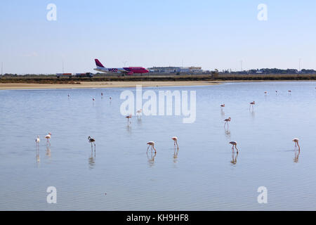 Flamingos on Larnaca salt lake, with an airliner taxiing in the background,  Cyprus - Stock Photo