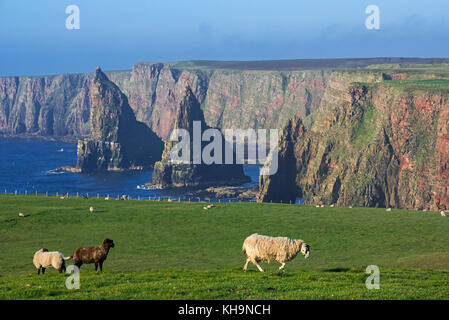 Duncansby Stacks, rock pinnacles south of Duncansby Head near John o' Groats, Caithness, Highland, Scottish Highlands, - Stock Photo