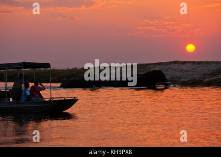 Tourists on a boat watching a herd of elephants crossing Chobe river at sunset, Chobe National Park, Botswana - Stock Photo