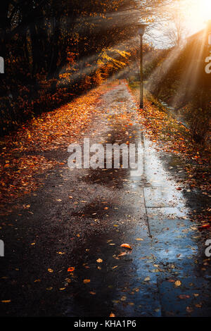 Autumn sun rays sunbeam appear over sidewalk in a rainy day. Fallen golden leaves laying on the ground. Backlit - Stock Photo
