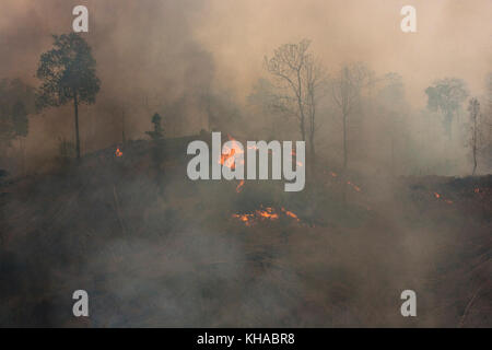 Deforestation of the primary forest in the Taungoo area by fire to instal teak plantations, Burma - Stock Photo