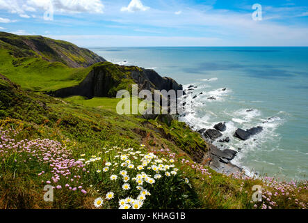 Steep coast, Hartland Quay, Hartland, Devon, England, Great Britain - Stock Photo