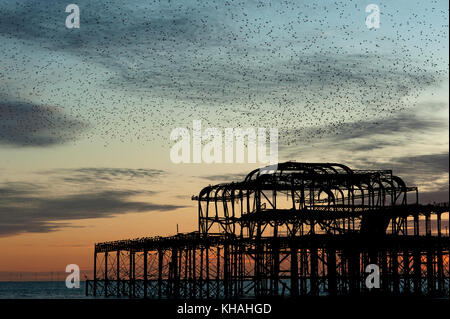 Murmuration over the ruins of Brighton's West Pier on the south coast of England. A flock of starlings swoops over the pier at sunset before roosting.
