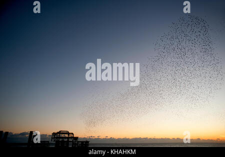 Murmuration over the ruins of Brighton's West Pier on the south coast of England. A flock starlings perform aerial - Stock Photo