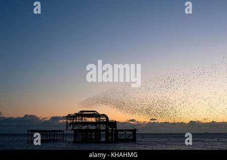 Murmuration over the ruins of Brighton's West Pier on the south coast of England. A flock starlings perform aerial acrobatics over the pier at sunset. Stock Photo