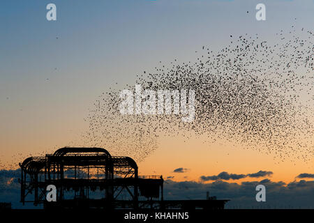 Murmuration over the ruins of Brighton's West Pier on the south coast of England. A flock starlings perform aerial acrobatics over the pier at sunset.