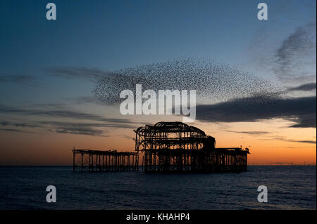 Murmuration over the ruins of Brighton's West Pier on the south coast of England. A flock of starlings swoops in - Stock Photo