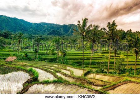 water rice field cloudy in amed. bali - Stock Photo