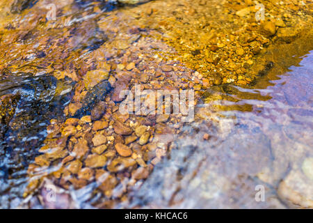 Macro closeup of clear orange red creek with seethrough transparent water and rocks or stones in Dolly Sods, West - Stock Photo