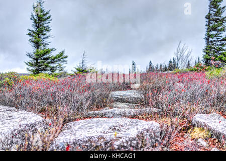 Morning dark sunrise with cloudy sky in Dolly Sods, Bear Rocks, West Virginia with autumn orange and red foliage - Stock Photo