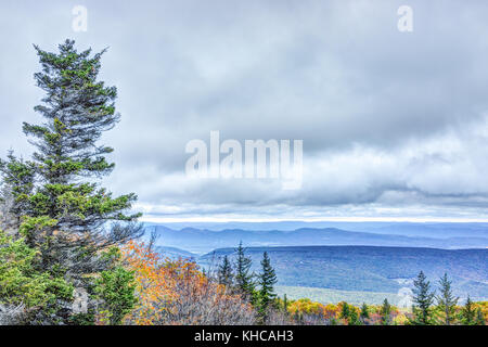 Morning dark sunrise with blue sky and golden yellow orange autumn foliage in Dolly Sods, Bear Rocks, West Virginia - Stock Photo