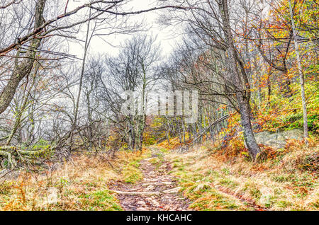 Empty trail path on yellow, golden autumn hike with bare trees during cloudy, overcast weather in Dolly Sods, West - Stock Photo