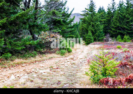 Empty hiking trail through colorful red foliage fall autumn forest with green dark pine trees on path in West Virginia - Stock Photo