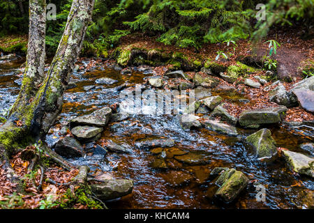 Red creek in Dolly Sods, West Virginia during autumn, fall with green pine tree forest and water river, fallen leaves - Stock Photo