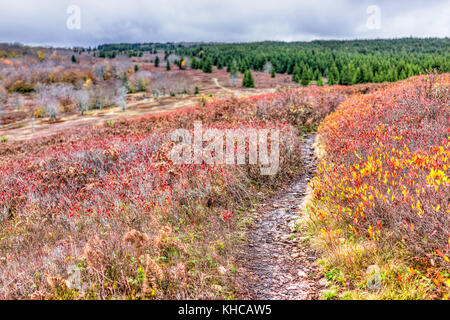 Hills trail path meadow on red, yellow, golden, orange autumn hike with bushes during cloudy, overcast, stormy weather - Stock Photo