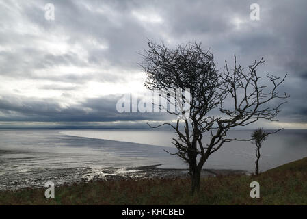 Silhouette of windswept trees on Brean Down, Somerset, England looking out to sea - Stock Photo