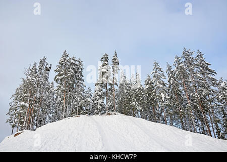 Winter forest on the snowy slope with blue sky background - Stock Photo