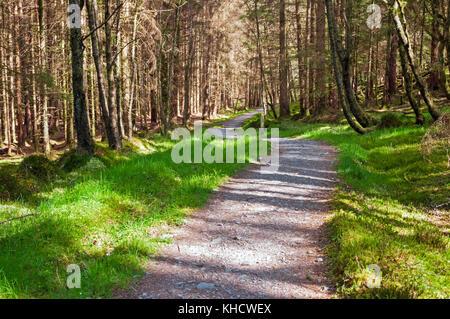West Highland Way trail through forest, Scotland - Stock Photo