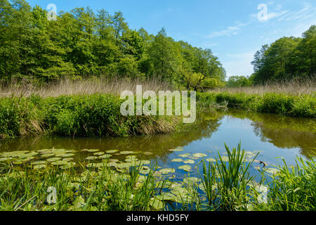 Small river in a wood - Stock Photo