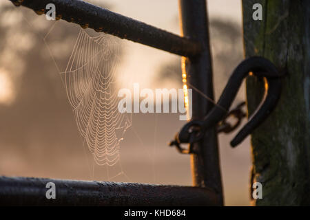 a cobweb on a metal gateway in the morning light - Stock Photo