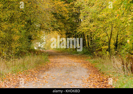 an autumnal country lane in leicestershire - Stock Photo
