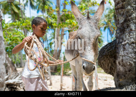 BAHIA, BRAZIL - MARCH 11, 2017: A mule stands with a young boy on the palm fringed shore of a northeastern brazilian - Stock Photo