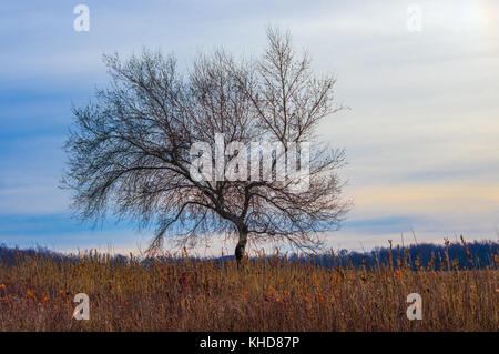 A single tree with bare limbs stands against the streaked skyline in the field of Big Meadows at Shenandoah National - Stock Photo
