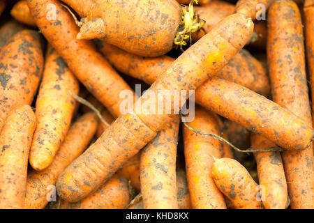 Carrots in the market Carrots background texture - Stock Photo