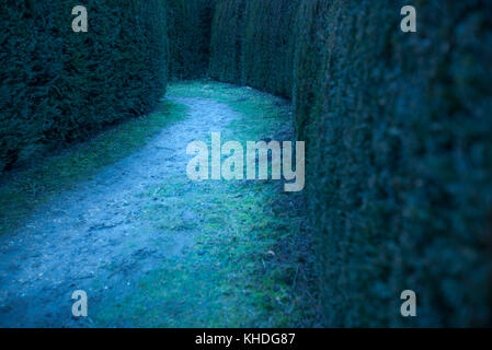 Path in hedge maze - Stock Photo