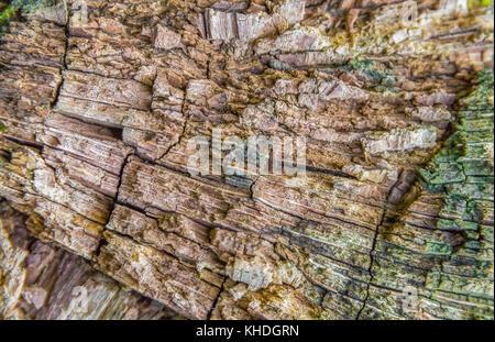 full frame rotting wood detail - Stock Photo