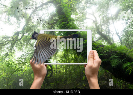 female hands holding a tablet take picture Crested Finchbill on Beautiful rain forest background, 3d concept - Stock Photo
