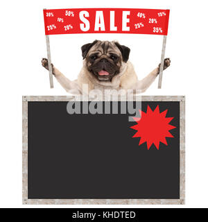 happy cute pug puppy dog holding up red banner sign with text sale % off, with blank blackboard, isolated on white - Stock Photo