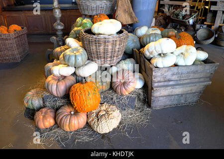 Selection of various gourds and pumpkins for sale at Halloween inside a garden centre shop in Los Angeles, California - Stock Photo