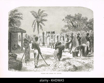 Slaves Picking and Drying cotton, 19th Century, United States - Stock Photo