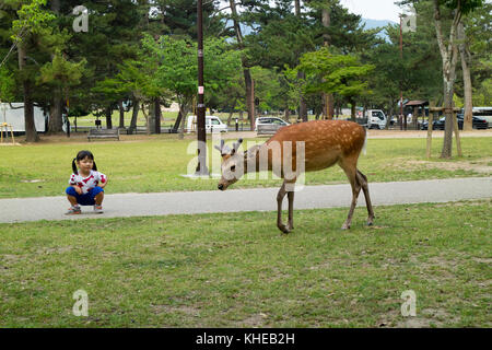 Nara - Japan, May 30, 2017: Litle girl is looking at a deer that wonders freely in the park at the Kasuga Taisha - Stock Photo