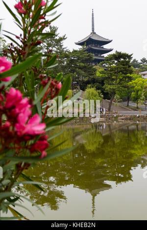 Nara, Japan -  May 30, 2017: View of the Five Storied Pagoda of the Kofukuji Temple in Nara in spring from the Sarusawa - Stock Photo