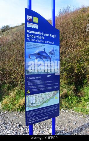 Information Signs on Monmouth Beach, Lyme Regis, Dorset, UK - John Gollop - Stock Photo