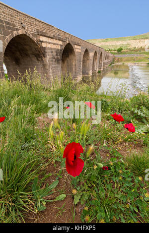 Red poppy flowers and ancient bridge on the River Tigris, in the background, in Diyarbakir, Turkey.  The bridge - Stock Photo