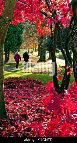 Ashbounre Park, Derbybshire, UK. 17th November, 2017. UK Weather bright colourful autumn day in Ashbounre Park, - Stock Photo
