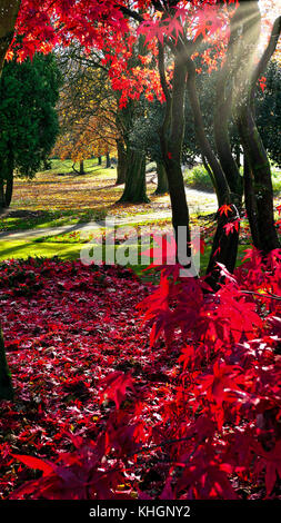 Ashbourne Park, Derbybshire, UK. 17th November, 2017. UK Weather bright colourful autumn day in Ashbourne Park, - Stock Photo
