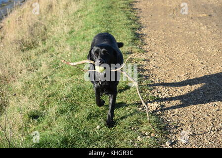 Hampshire, UK. 17th Nov, 2017. Birds, animals and people enjoy beautiful autumn weather in Lymington and Keyhaven - Stock Photo
