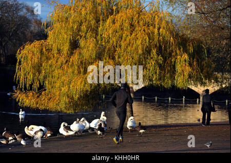 London, UK. 19th Nov, 2017. Sunshine in Hyde Park on chilly morning. Credit: JOHNNY ARMSTEAD/Alamy Live News - Stock Photo